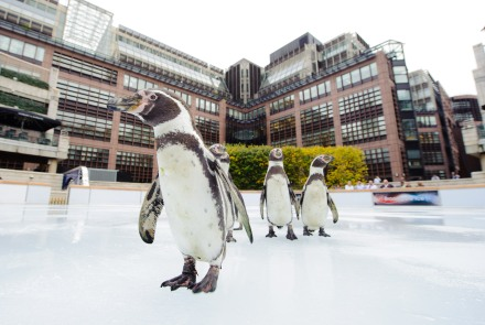 Penguins at Broadgate ice skaing rink, from the Time Out website http://now-here-this.timeout.com/2011/11/13/ice-ice-baby-top-5-london-ice-skating-rinks/